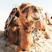 Quiz online animali del deserto