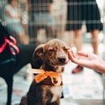 Cani Adottabili Adozioni Animali