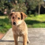 Cuccioli Adottabili Adozioni Animali