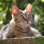 Gatti Adottabili Adozioni Animali