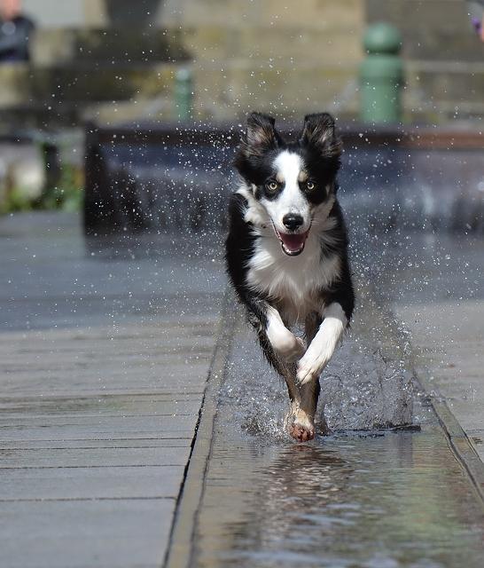 Immagine Cane che gioca con aqua