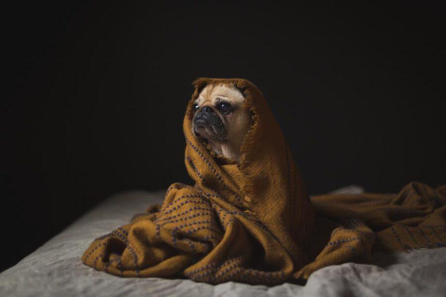 Immagine Cane con coperta sensibile ai rumori