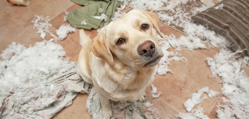 Segnali di stress cani distruzione