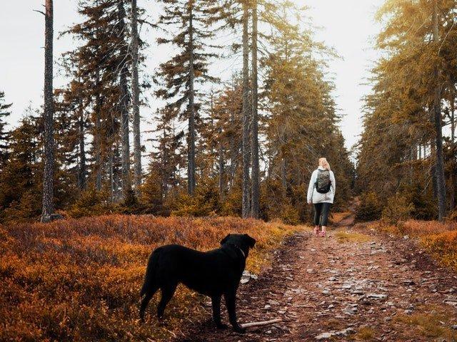 Consigli cani e autunno foto 1