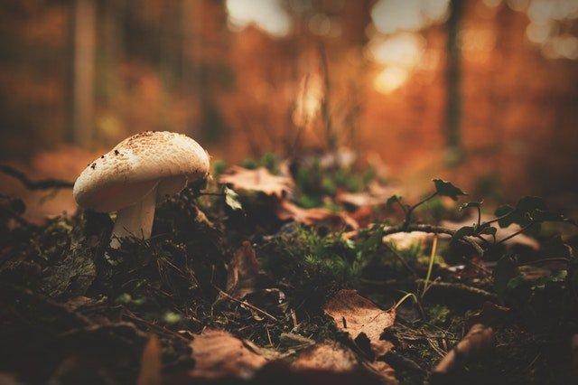 Pericoli cani e autunno funghi