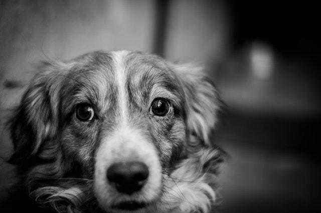 Immagine Cane Lunghe attese veterinario