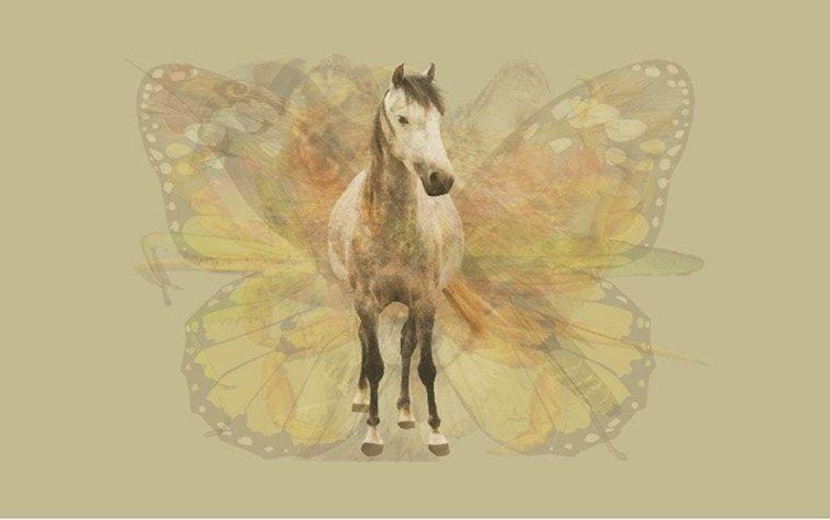 Quiz personalità Cavallo