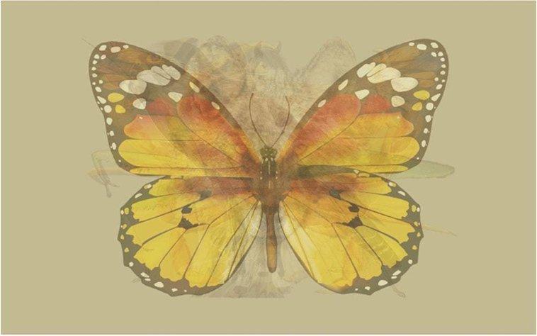 Quiz personalità Farfalla