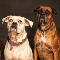 Quiz online Cani Livello Intermedio