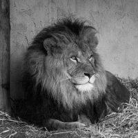 Quiz online sul mondo degli animali Facile