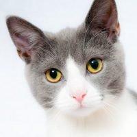 Quiz online sul mondo degli animali Gatti